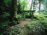 """Forest Shrine\"": Welcome to Our Image Gallery"
